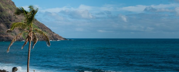 Palm tree in front of black rock stone beach coast on cape verde island
